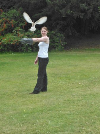 Swinton Park Birds of Prey: Barn owl flying!