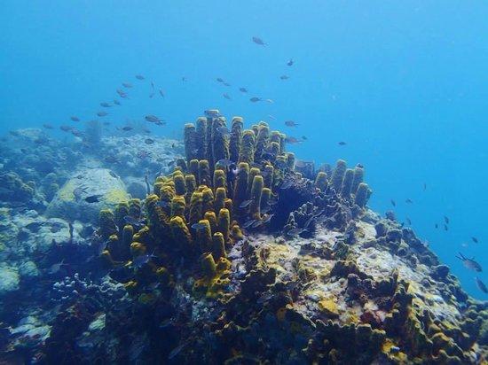 Ti Kaye Resort & Spa : Coral