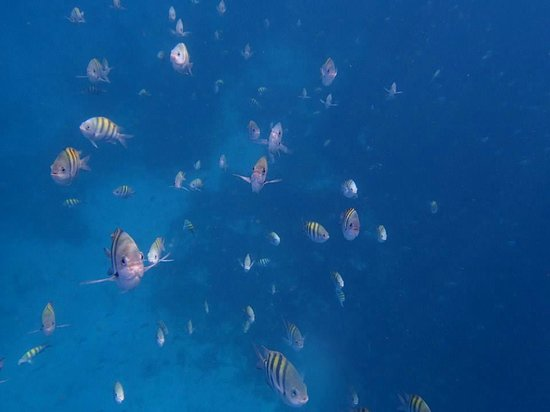 Ti Kaye Resort & Spa : Fish everywhere!