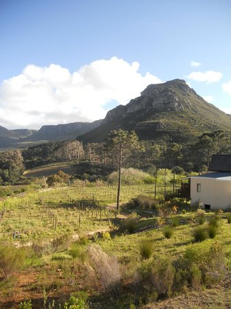Silvermist Mountain Lodge Estate : Vineyard and Mountain view