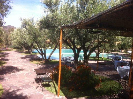 L'Oliveraie de Marigha: Terrasse et piscine