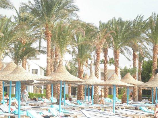 Marlin Inn Azur Resort: пальмы на пляже