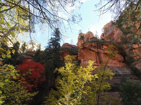 Sedona Summit Resort: Fall foliage from West Fork Trail