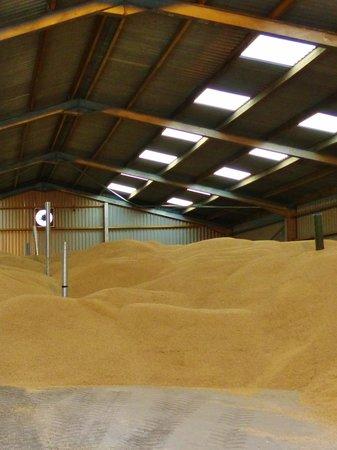 Octofad Farm: Dried barley