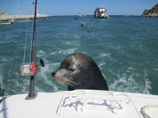 Fishing cabo style picture of cabo fishing charters for Fishing cabo san lucas