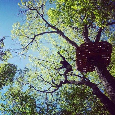 Treetop Trekking Huntsville: Wicked Tarzan Swing!