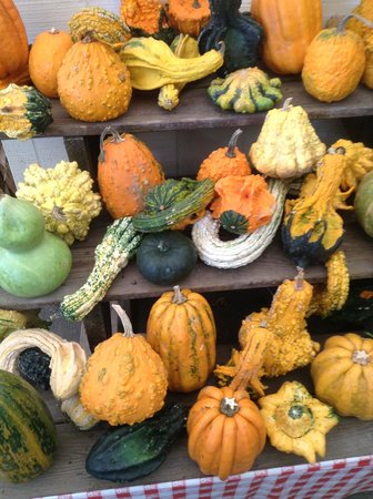 Wolff's Apple House: Fantastic Gourds