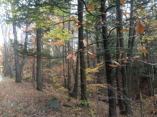 Ridley Creek State Park: Beautiful Woods