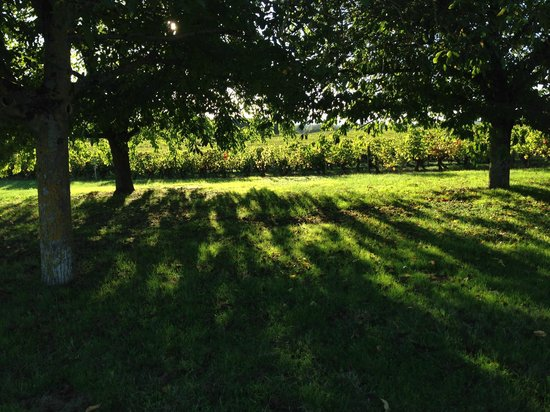 Domaine de Beausejour : Beautiful evening light through the trees