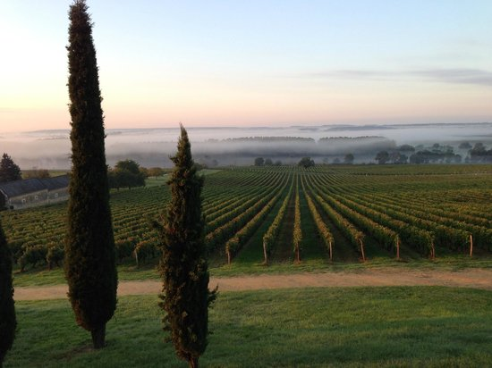 Domaine de Beausejour : Early morning mists!