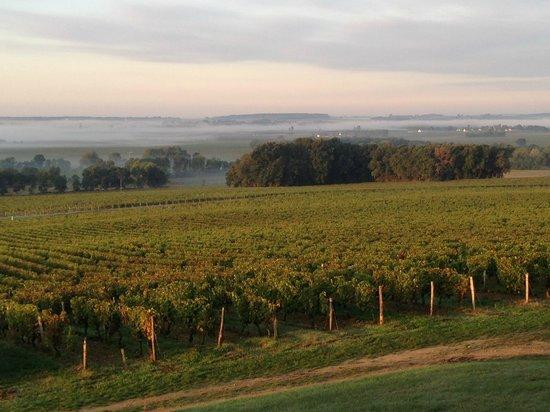 Domaine de Beausejour : Gorgeous misty morning!