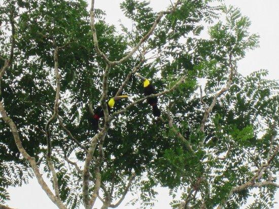 Cabinas Jade Mar: tucanos en el jardin!