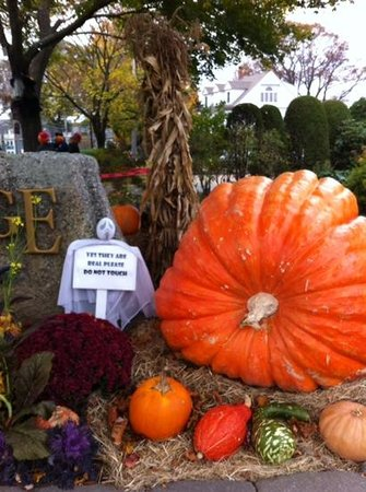 The Anchorage By the Sea : dont touch the pumpkin for crying out loud!!!