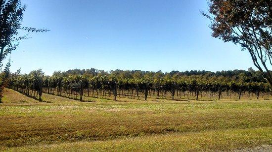 Williamsburg Winery: Vineyard