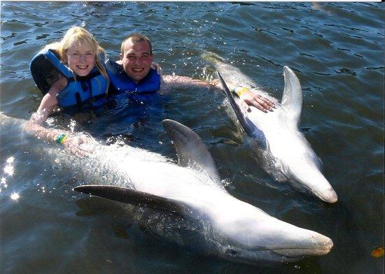 Delfinario: les dauphins