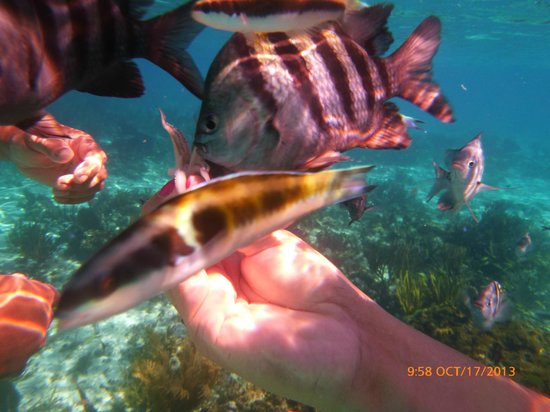 Seven Seas Charters Day Tours : Garden Coral
