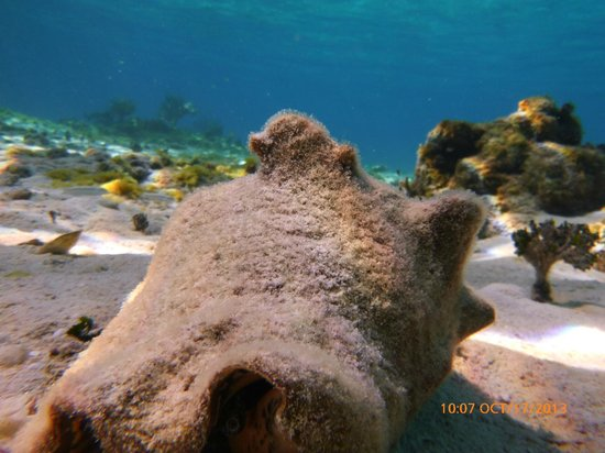 Seven Seas Charters Day Tours : Conch