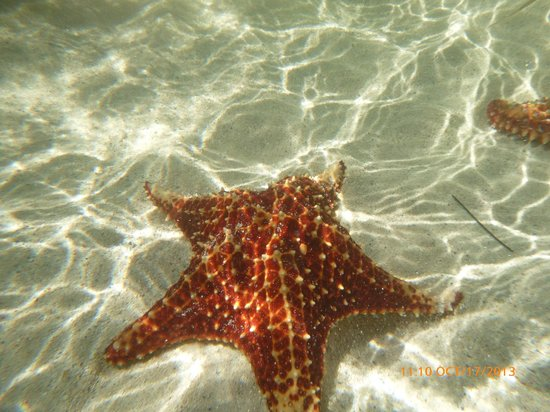 Seven Seas Charters Day Tours : Starfish Point beach