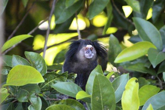 Vila Pedra Mar: Monkeys appeared in the trees beside the hotel