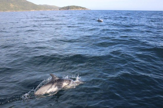 Vila Pedra Mar: A school of dolphins we crossed in the open sea (swam with us for a while!)