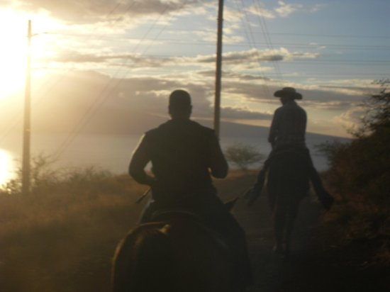 Lahaina Stables: What a sight!