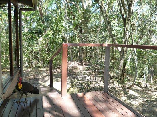 Kondalilla Eco Resort: View from deck