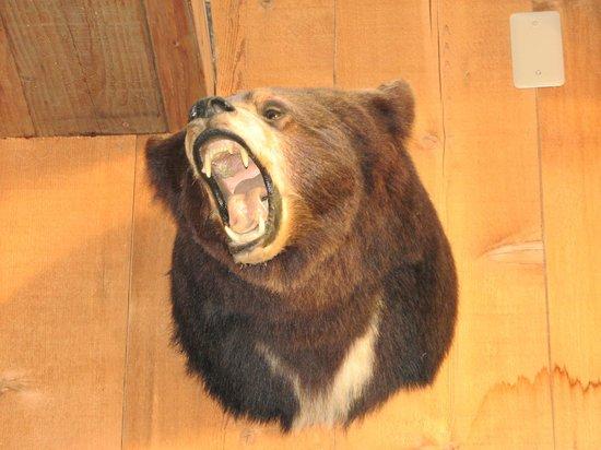 Walpack Inn: Bear are other NJ inhabitants.