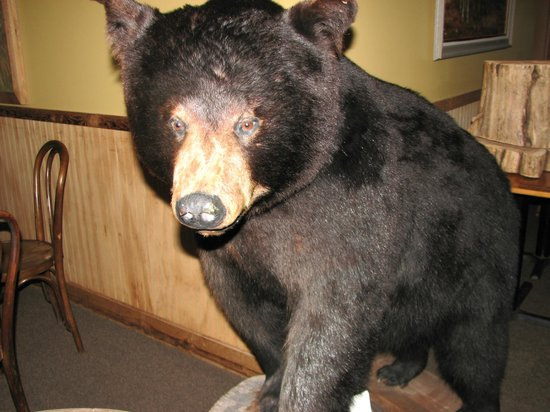Walpack Inn : You can take your photo with the bear if you're inspired to do so.