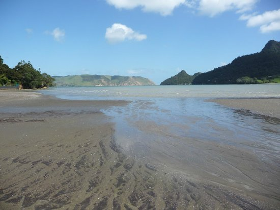 Huia Beach Store & Cafe : Shallow and perfect for paddling