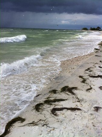 Palm Court Motel : Honeymoon Island