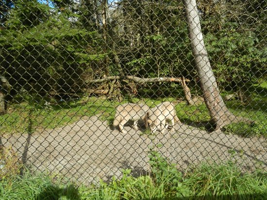 Two Rivers Wildlife Park: Wolves