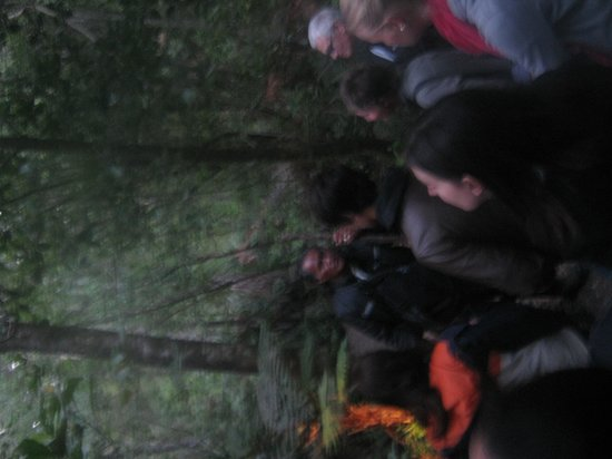 Footprints Waipoua: Information on tour