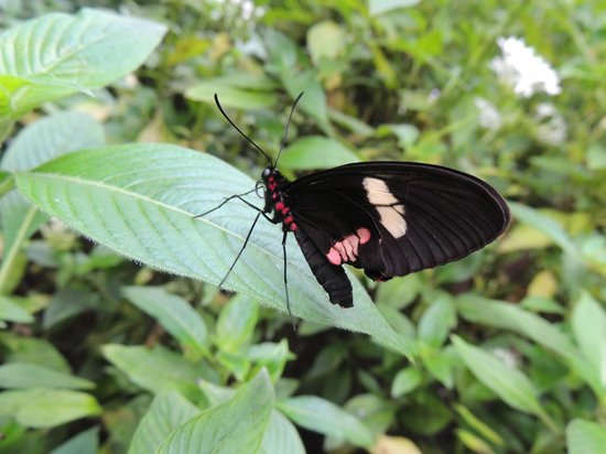 The Butterfly Place: Butterfly