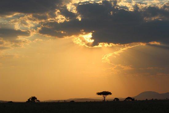 Bright African Safaris: sunset