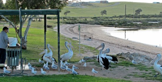 Streaky Bay, Australia: Always something to watch.