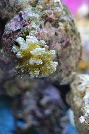 Fihalhohi Island Resort: Кораллы на берегу