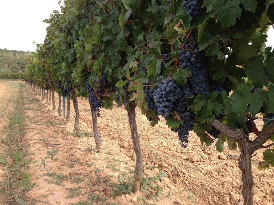 Torres : Виноградники Торрес