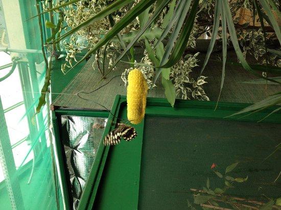la serre aux papillons photo de chateau de goulaine nantes tripadvisor. Black Bedroom Furniture Sets. Home Design Ideas