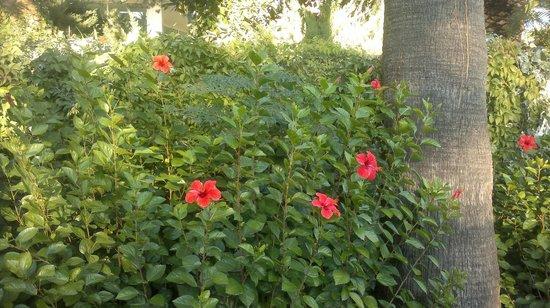 Side Star Elegance : Garten