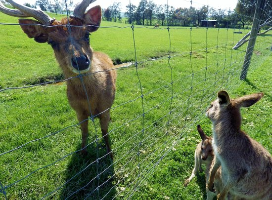 Mansfield Zoo: Feeding.