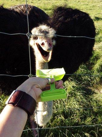 Mansfield Zoo: Spade feeding.