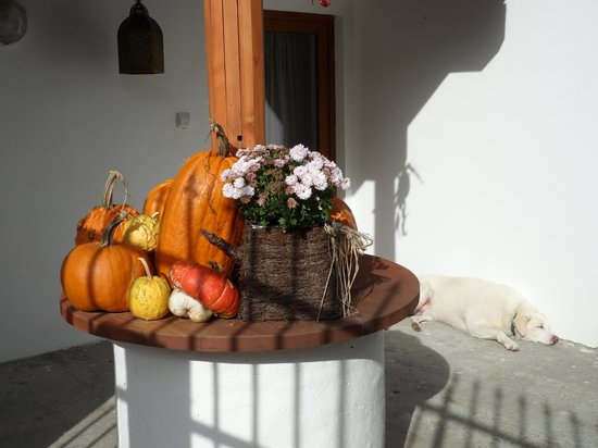 Secret Transylvania Guest House : Entrance to the main house with its relaxed welcoming committee