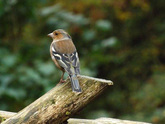 Watersmeet National Trust Tea Rooms: Wildlife at Watersmeet