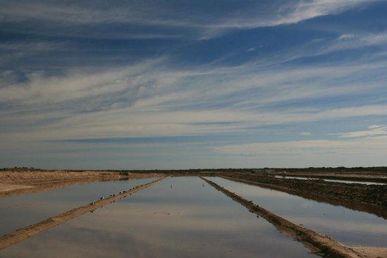 Vila Galé Tavira : Salt marshes