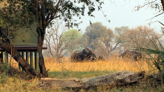 Nkasa Lupala Tented Lodge: Elefanten im Camp