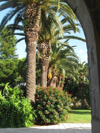 Hotel Caiammari: Palmen und noch mehr Palmen