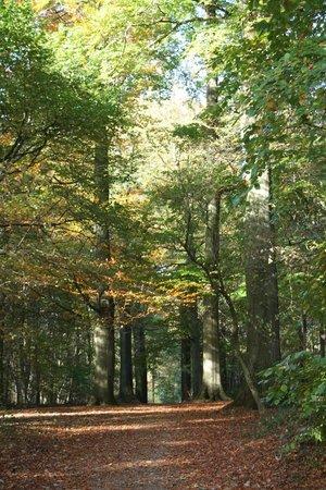 Forêt de Soignes : Promenade automnale