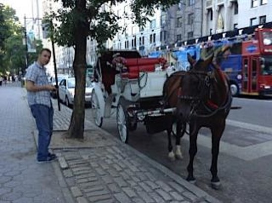 Central Park Tours: Horse Drawn Carriage NY