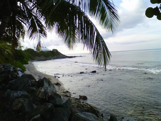 Tamarind Reef Resort, Spa & Marina : great snorkeling