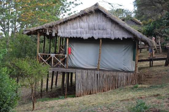 Ngorongoro Forest Tented Lodge: Tented Lodge